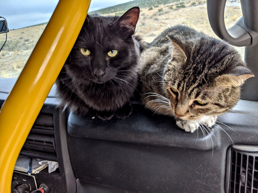 Cats on bus 006