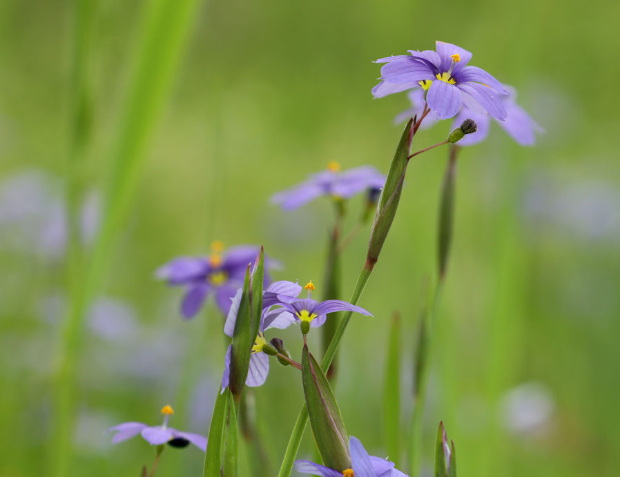 Purple flower 005